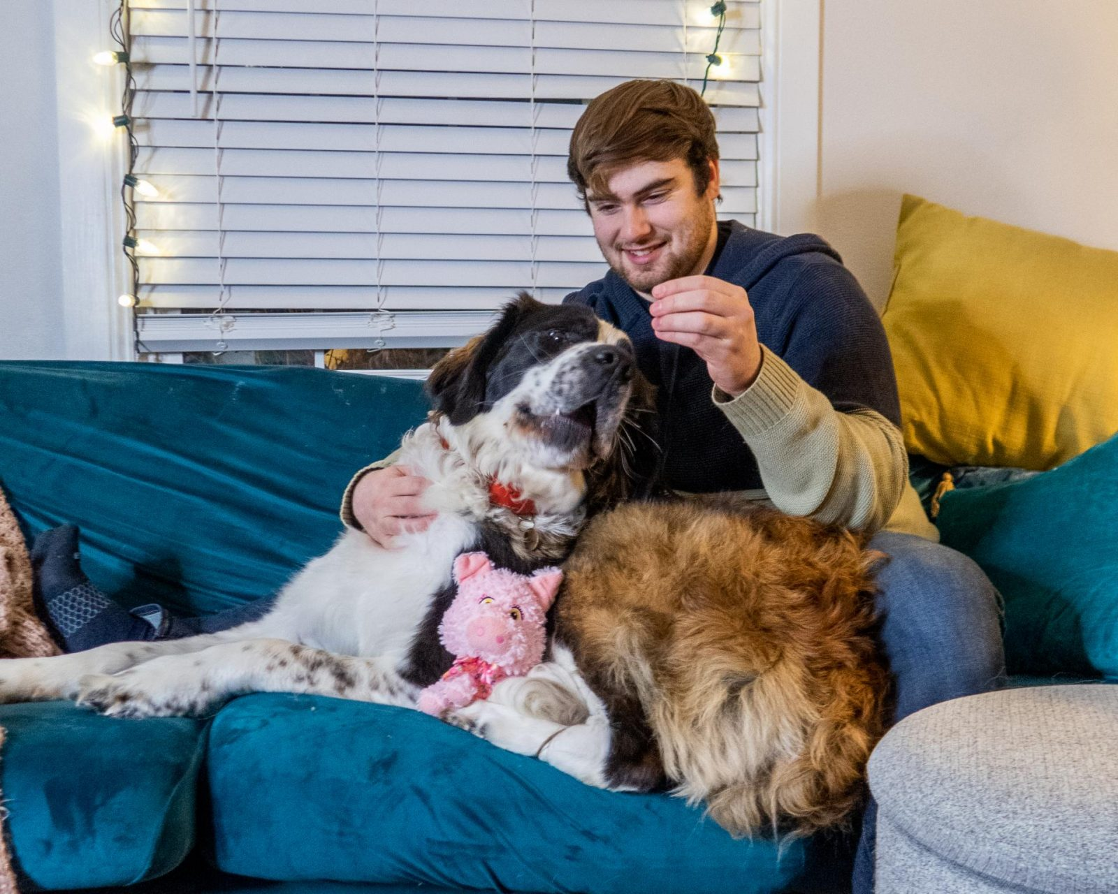 Maisie the Saint Bernard is cuddling on the couch with her dad, Garrett, who is offering her a treat. Maisie is also snuggling her favorite piggy toy.