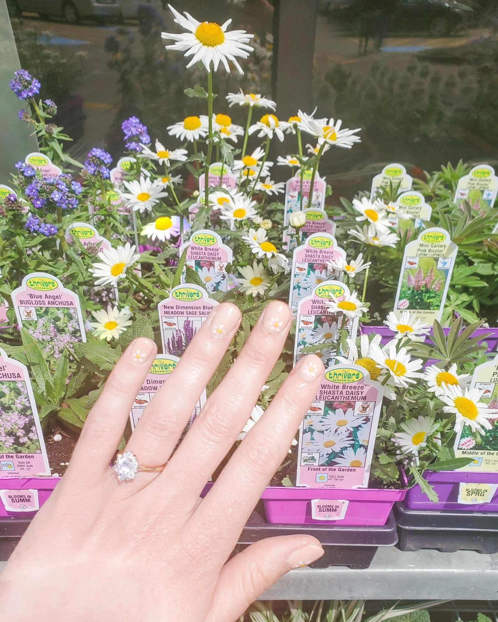 A manicured hand showing off the daisies painted on her nails in front of live daisy plants.